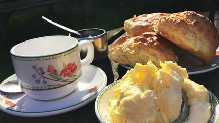 Traditional English cream tea with a spread of fresh baked scones pot of jam and dollops of clotted cream poured outdoors on a rustic country table in bright afternoon sun