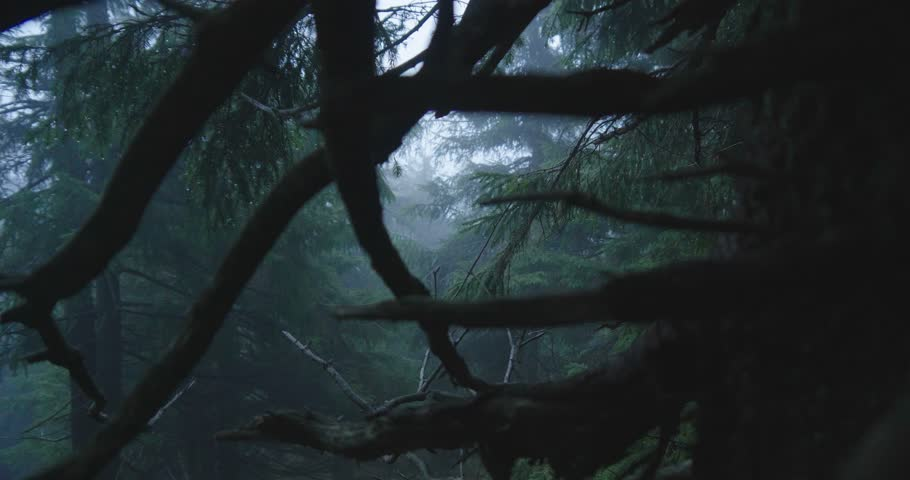 Dense spruce trees and blue spots between them in the Carpathians in slo-mo | Shutterstock HD Video #1025184668