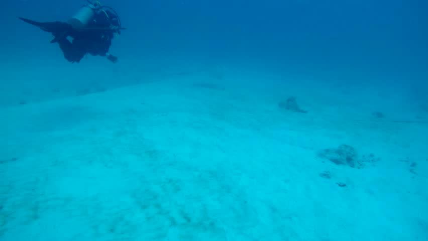 Scuba diver off the coast of Playa del Carmen swimming with remora fish. | Shutterstock HD Video #1025228078