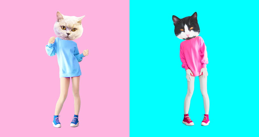 Animation minimal art. Two cute cats dancing | Shutterstock HD Video #1025361398
