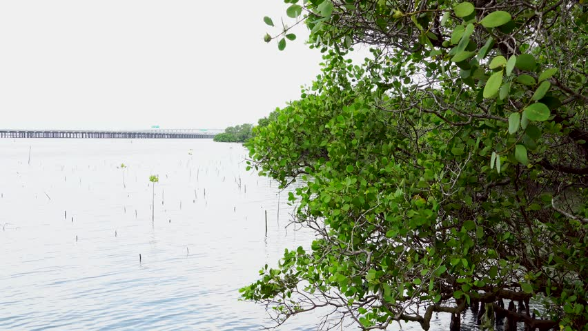 Beautiful Tropical Mangrove Forest | Shutterstock HD Video #1025665538