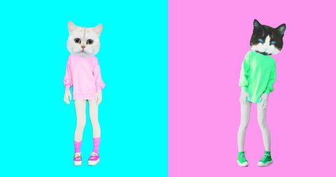 Animation minimal gif art. Set of funny cats