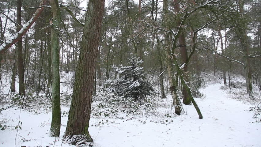 Pan of snow covered hiking trail in forest | Shutterstock HD Video #1026892988