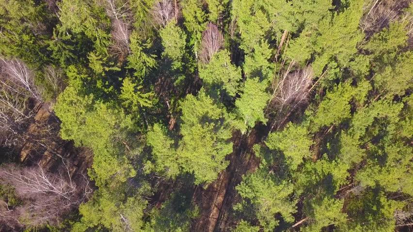 Forest autumn summer | Shutterstock HD Video #1027000568