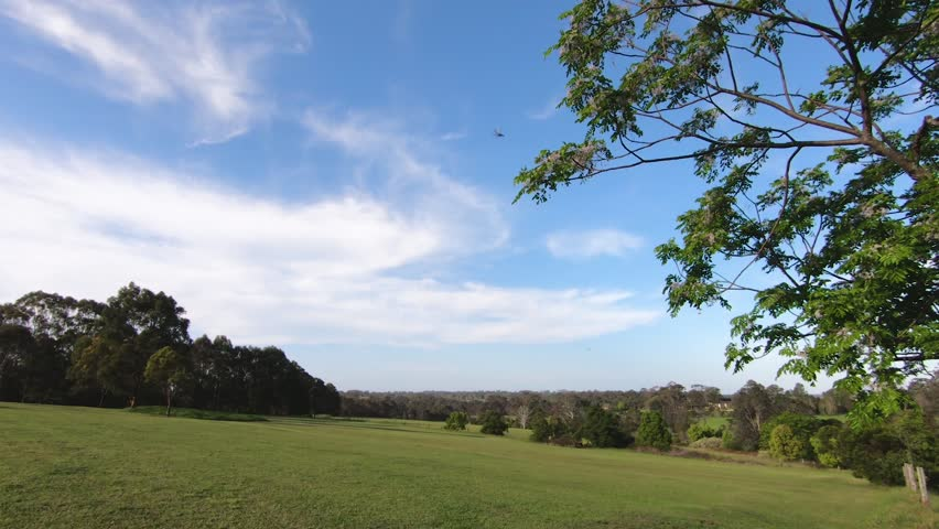 A peaceful view on slope of a large hill covered with a low green grass framed with blooming trees, that sway in the wind under a blue cloudy sky.