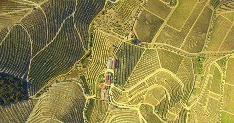 Vineyards Field Aerial
