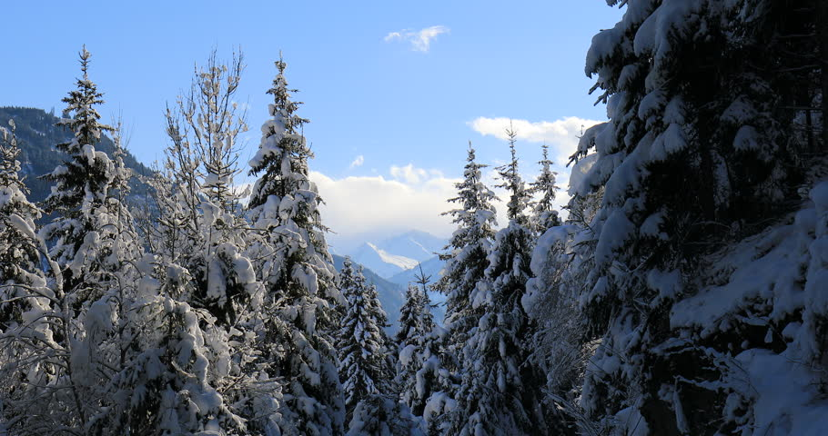 Snow covered trees in winter in mountains | Shutterstock HD Video #1027544348