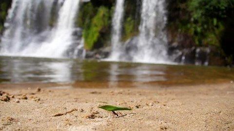 Ant working waterfall - Carrancas - Minas Gerais