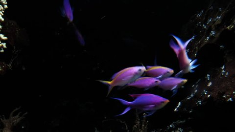 Small colored fish swim in an aquarium. Tropical fish and corals in aquarium the Berlin Germany