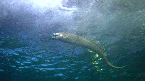 moray under sea