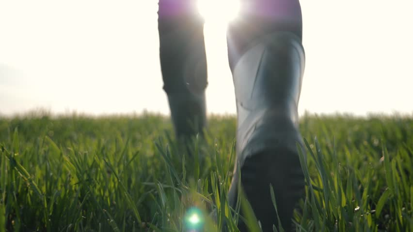 Woman farmer goes in rubber boots on a green field in the rays of the sun at sunset. Cultivation of agricultural products. Organic Products Concept | Shutterstock HD Video #1028076848