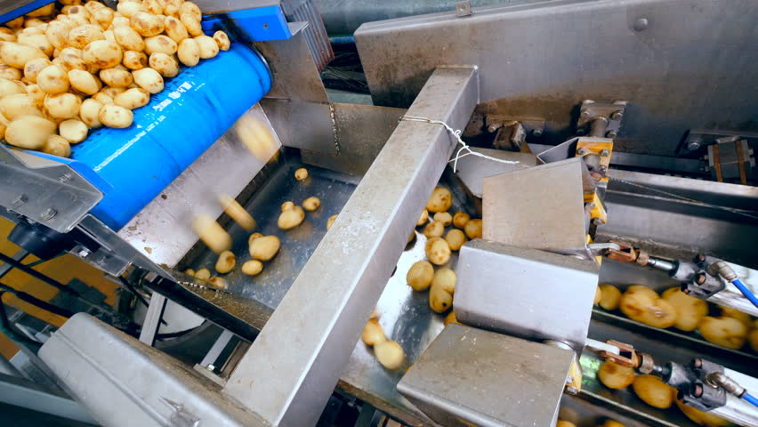 Potatoes are falling into the metal transporting machine | Shutterstock HD Video #1028120558