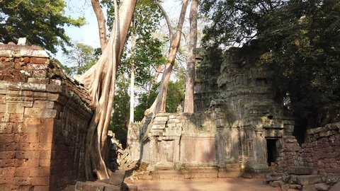 Ta Prom temple is one of the most famous temples of Angkor. TA prom Temple is known for its huge trees and roots growing from its walls. archaeological Park of Angkor, Siem reap, Cambodia.