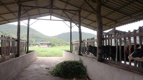 Cow nature farm