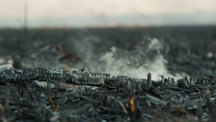 black smoky stick on the burnt ashed ground after big fire in the forest. 4k footage