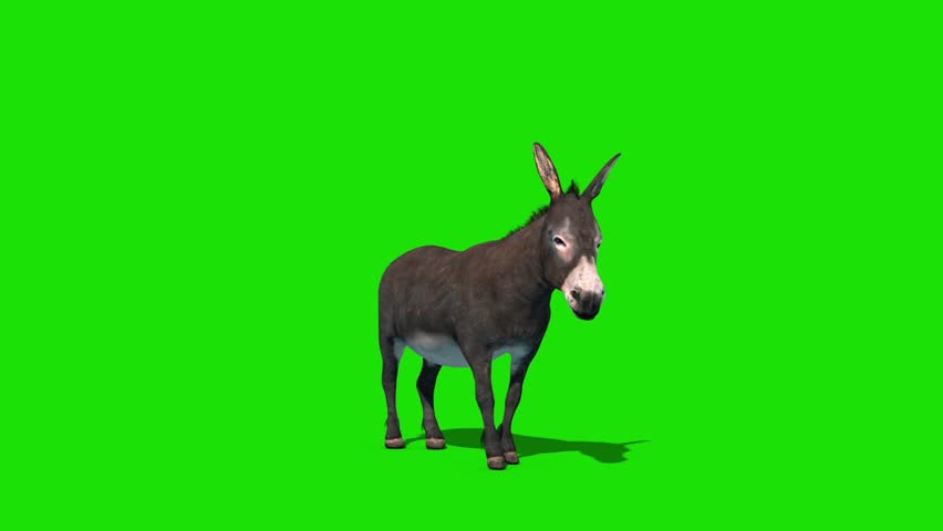 Donkey Animal Kick Green Screen Front Loop 3D Rendering Animation #1028602988