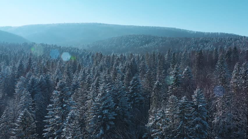 Winter Forest Snow Pine trees epic sunset in winter aerial view 4K cideo. Drone Flight Above Spruce Winter Forest. Beautiful Background WInter, Frozen Trees Golden Sunset, sun lens