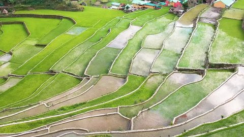 Aerial view of the 2000 year old rice terraces located in Batad, Banaue Ifugao Philippines. Drone shot of the rice paddies during planting season