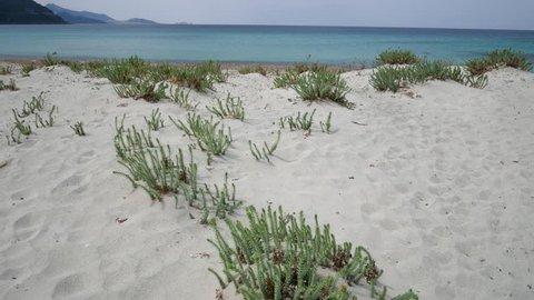 Sand dune with sparse vegetation of a European desert with sea on background. Shrubs of Mediterranean scrub on sandy dunes. Ostriconi beach, Desert des Agriates, Balagne region, Corsica, France.