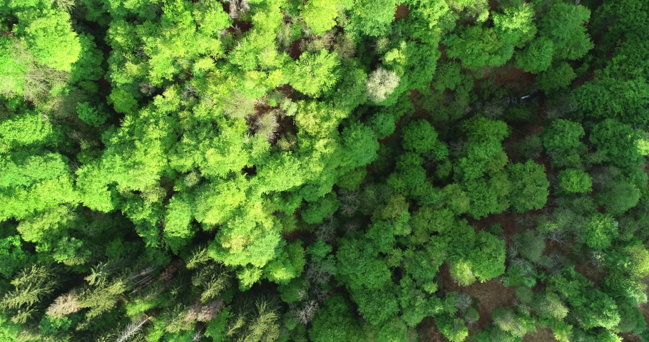 Flying over woods in summer, warm afternoon light | Shutterstock HD Video #1029451448