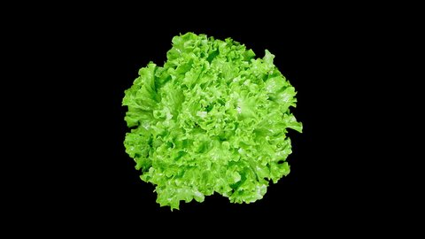 Top View of Fresh Raw Lettuce Rotating on the Black Background in SloMo with Droplets Splashing Around from Green Leaves. Shot with High Speed Camera, Phantom Flex 4K.