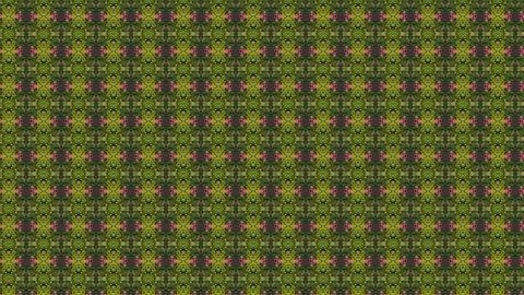 Abstract animated kaleidoscope motion background. Sequence multicolored graphics ornaments patterns. Bright natural green red with plant and flowers backdrop. Multicolored seamless loop background.