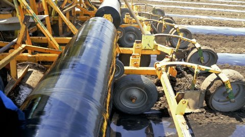 Plastic mulch bed laying for vegetable production  in the same pass,  plastic mulch laying equipment dispenses fertilizer, lays down irrigation  lines and rolls out a continuous of mulch plastic