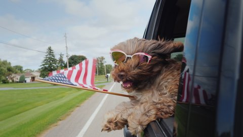 Funny Dog with the American flag looks out of the window of the car. 4th of july and independence day in usa concept