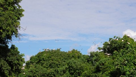 Flock of Pelicans and yellow billed Storks flying in the Sky. Tanzania, Africa