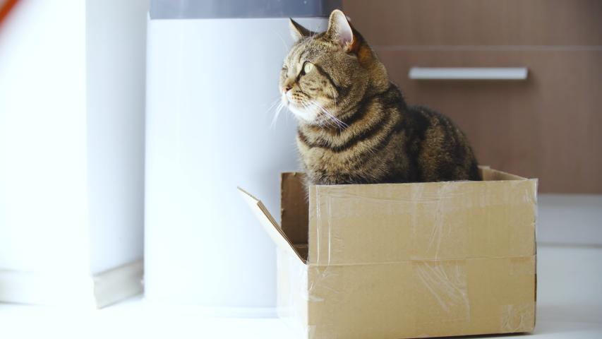 Cat inside the box look in the camera 4K | Shutterstock HD Video #1031108618