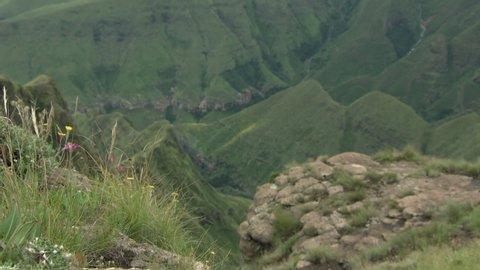 Wildflowers on the edge of a peak in the Drakensberg