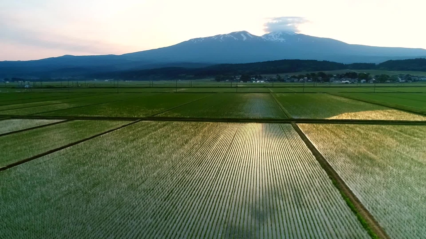 Aerial Shot of Mt. Chokai & Paddy Field in Early Morning