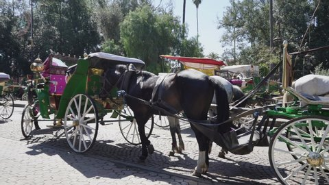Horse drawn carriages in Marrakech