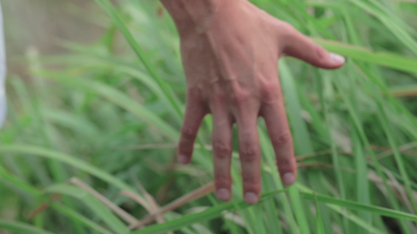Women feeling the connection to the earth with her hand reaching through high grass. Shot in Slowmotion, environment and activist concept. | Shutterstock HD Video #1031996798