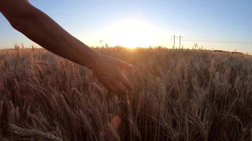 Wheat field sunset walk  hand | Shutterstock HD Video #1033103048