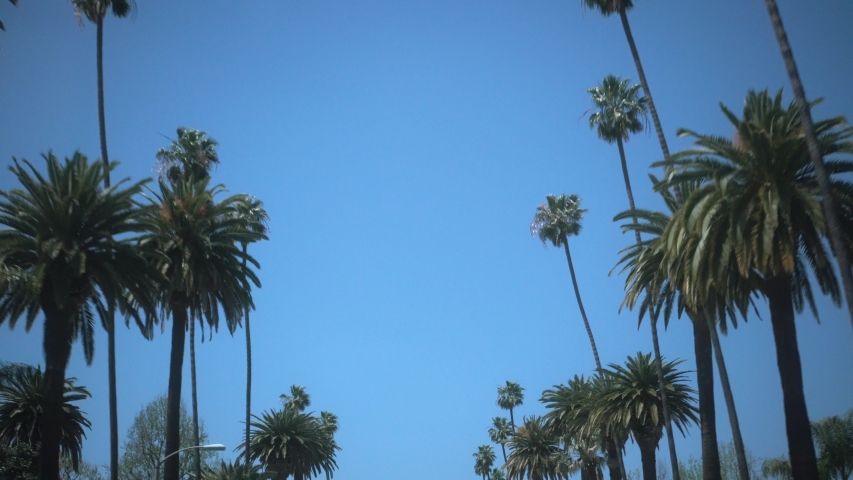 Driving through Beverly Drive palms trees in Los Angeles Beverly hills against a blue summer sky with sunshine. United states a6500 4k | Shutterstock HD Video #1033995458