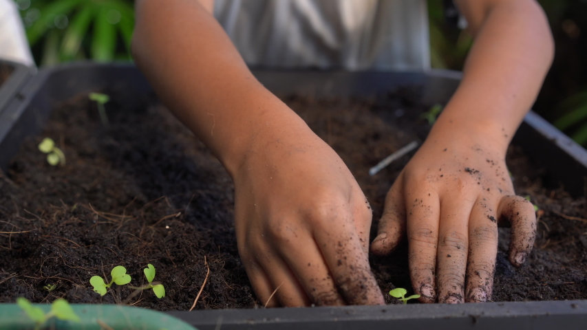 Closeup hand child planting seeds in pots.Planting young tree by kid hand on back soil as care and save wold concept | Shutterstock HD Video #1034237858