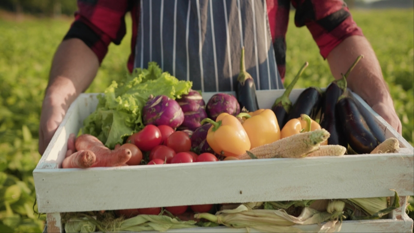 Happy young farmer is holding a box of organic vegetables look at camera at sunlight agriculture farm field harvest garden nutrition organic fresh portrait outdoor slow motion | Shutterstock HD Video #1036597718