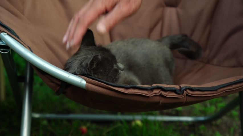 Senior man hand pets adorable little cat with dark grey fur lying in brown armchair on summer day close view | Shutterstock HD Video #1036618868