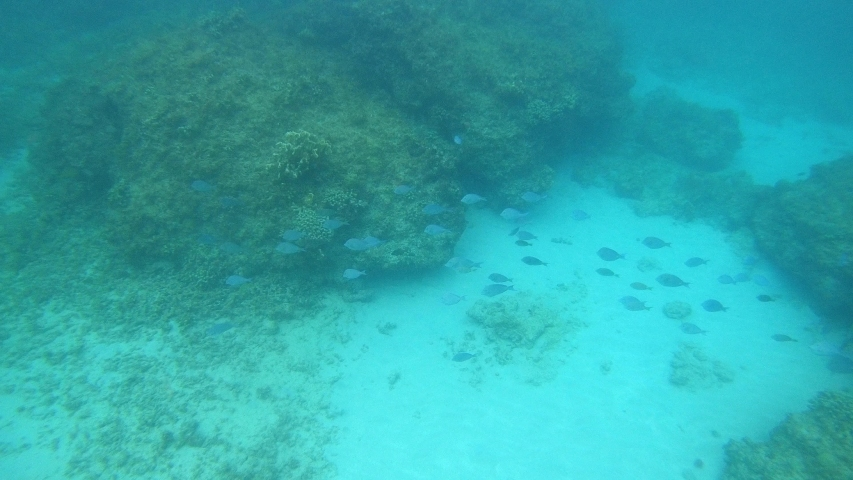 Small swarm of fishes in beautiful turquoise water. | Shutterstock HD Video #1036732718