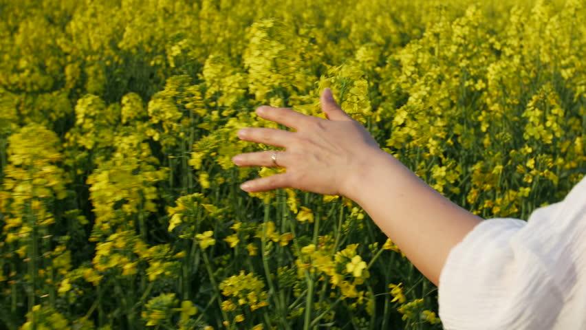 Girl running happy in Brassica rapa canola field   Shutterstock HD Video #10376708