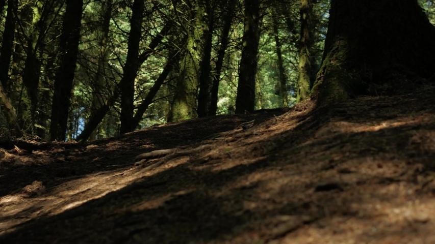 Barnstaple / United Kingdom (UK) - 05 20 2019: Mountain biking Mtb Profi Cyclist jumps high over a hill in the forest.