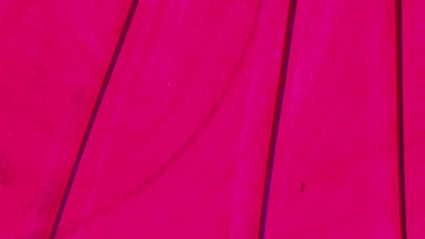 Umbrellas made of colorful fabrics, Thai crafts Lanna umbrella,Chiang Mai Thailand. | Shutterstock HD Video #1039281338
