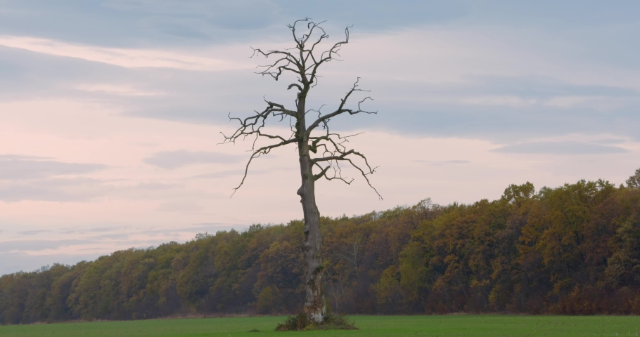 Single tree in the valley. Leafless strange tree in the middle of the field. Lifeless between alive concept. | Shutterstock HD Video #1040989328