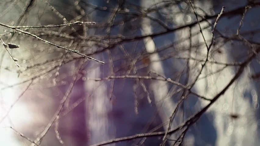 Snow is quietly falling in the winter forest. Vertical video frame 9:16   Shutterstock HD Video #1041155458