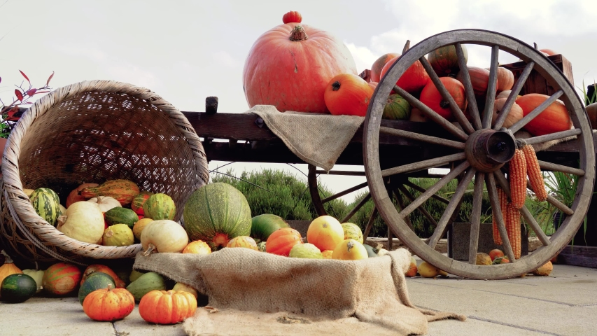 Autumn Halloween, Ancient wagon with Pumpkins. Ripe autumn vegetables in a old wooden cart. . Sensation in Fuji Kawaguchiko, Japan. | Shutterstock HD Video #1042178398