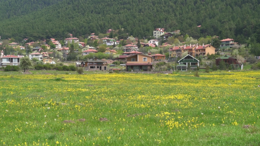 Forest village behind the yellow flowers. There is a pine forest behind the village. Panoramic pan camera movement. Everywhere meadow and grasses covered with yellow flowers.Duplex house calm peaceful | Shutterstock HD Video #1044584188