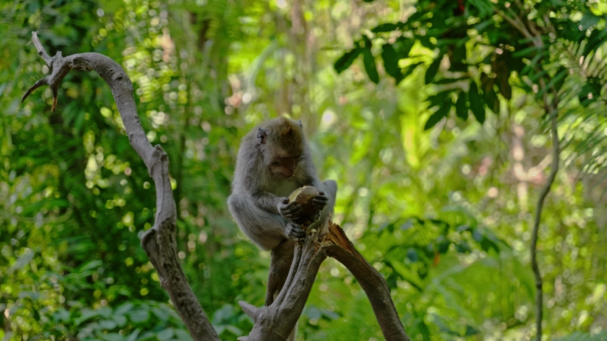 Visiting monkey forest at Ubud, Bali | Shutterstock HD Video #1044792658