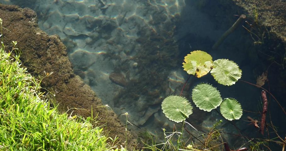 Water Lily Flowers Zen Calm Beautiful Lake Pond | Shutterstock HD Video #1045427908