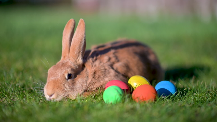 A cute Easter brown bunny is sitting in the grass importing colorful Easter eggs. Happy easter. | Shutterstock HD Video #1046772988